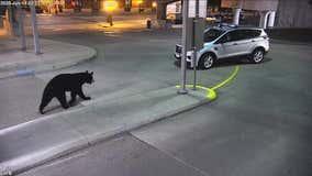 Black bear spotted in Union Depot parking garage in St. Paul, Minnesota