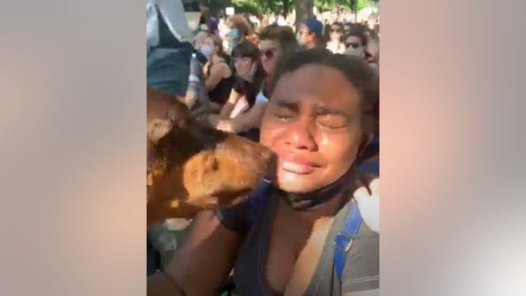 Dog comforts grieving protesters at demonstration over George Floyd's death