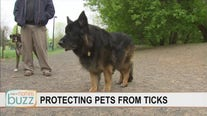 Protecting man's best friend from unwelcome summer friends: ticks
