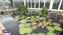 Floating beauty: Dale K explores Como's water gardens