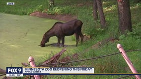 Minnesota Zoo opens to the public Friday