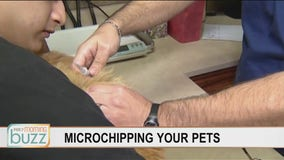 What pet owners need to remember about their furry friends with microchips