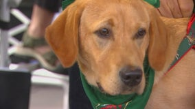 Wild say goodbye to team dog, Breezer, as he moves on to become service dog for veteran with PTSD