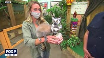 Maplewood Mall zoo reopens with new name