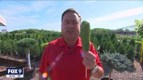 "Garden Guy Dale K shares his favorite plants ""on a stick"""
