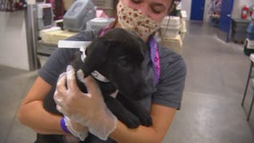 Back on the road, Animal Humane Society team returns with 40 dogs seeking homes