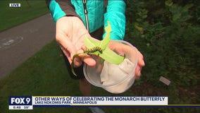 Monarch butterflies begin migration south
