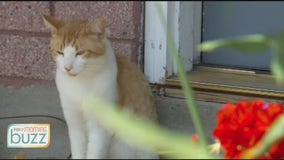 Are cats happier outside? An animal behaviorist takes on the furry debate