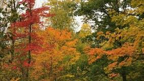 DNR: Some Minnesota parks between 25-50% peak color