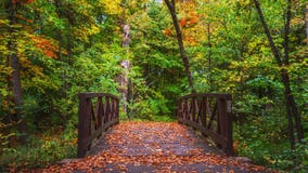 'It's not your imagination': Minnesota DNR confirms fall colors peaking early