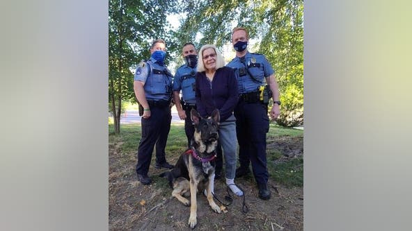 Earnest, missing therapy dog in training, found safe in St. Paul