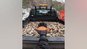 Water management officials remove 50k goldfish from Chaska lake