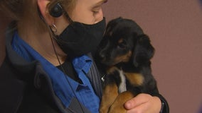 Animal Humane Society to give workers a week off during election