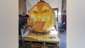 2,350 lb 'Tiger King' pumpkin carved for Anoka Halloween parade