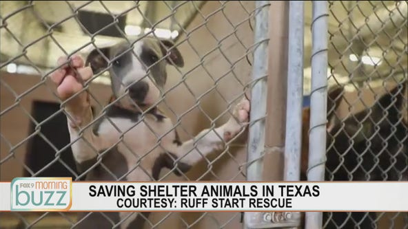 Ruff Start Rescue working to save dogs from Texas