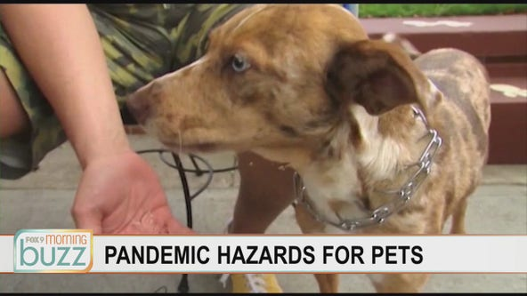 The top pandemic health hazards for pets (including baking and your cup of morning joe)