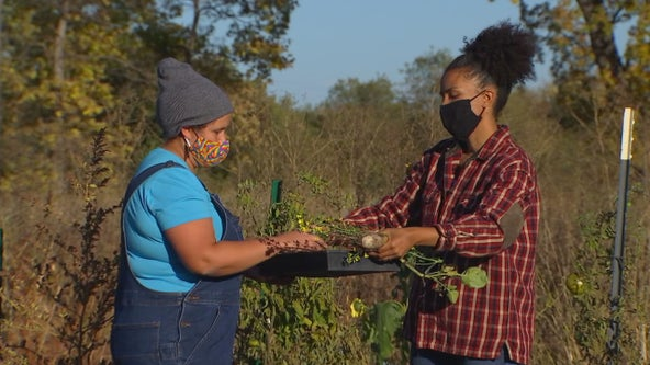 Renewed effort to increase amount of Black farmers in Minnesota