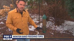 Winter bird feeding tips to attract a variety of songbirds to your yard