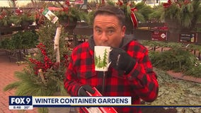 How to spruce up your winter container gardens with Garden Guy Dale K