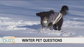 From booties to fighting winter weight gain - all of your winter pet questions answered