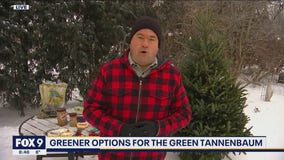 Green ways to give your Christmas tree new life