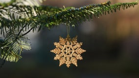 Dispose of Christmas tree properly to avoid spreading invasive species, Minnesota agriculture officials say