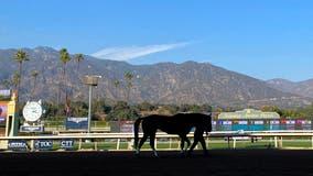 2-year-old colt fatally injured in race at Santa Anita