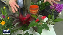 Bringing the great outdoors indoors with Garden Guy Dale K