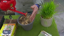 Indoor gardening for the winter - things you can plant right now