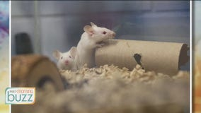 Mice up for adoption - Animal Humane Society on why the small critters make great pets