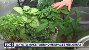 Ways to make your home spaces feel great with Garden Guy Dale K