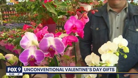 Unconventional Valentine's Day Gifts that last longer than fresh cut flowers