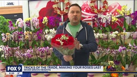 How to keep your roses looking great after Valentine's Day