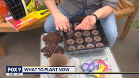 Getting a head start on your spring planting with Garden Guy Dale K