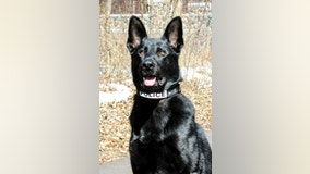 Anoka Police K-9 continues recovery after bullet struck trachea