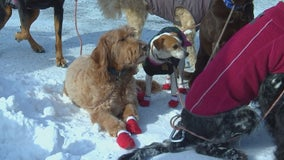 How to keep your dog safe during walks in the subzero cold