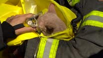 Firefighters rescue cat from Minneapolis fourplex fire