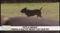 The best way to help your pet lose its winter weight gain