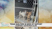 Ruff Start Rescue working to save animals in Texas after deep freeze