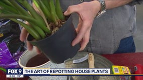 Don't panic about repotting - Garden Guy Dale K shares his tips & tricks