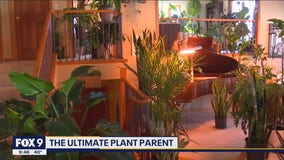 Tips on how to be the ultimate plant parent