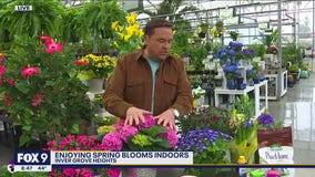 Itching for spring? The blooms you can enjoy indoors right now