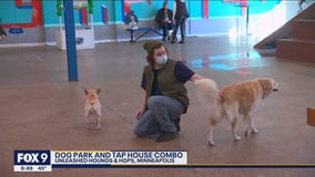 Minnesota's first tap house, dog park combo celebrates one year