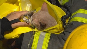 Cat rescued, given oxygen after fire at Minneapolis fourplex