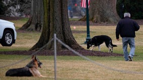 Biden's dogs, Champ and Major, are back at the White House