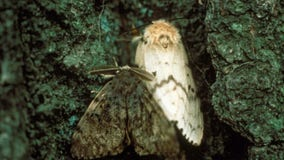 Loring Park among 13 proposed sites for gypsy moth treatment