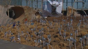 Vivian's Garden: Families plant pinwheels at U of M to raise awareness of CMV