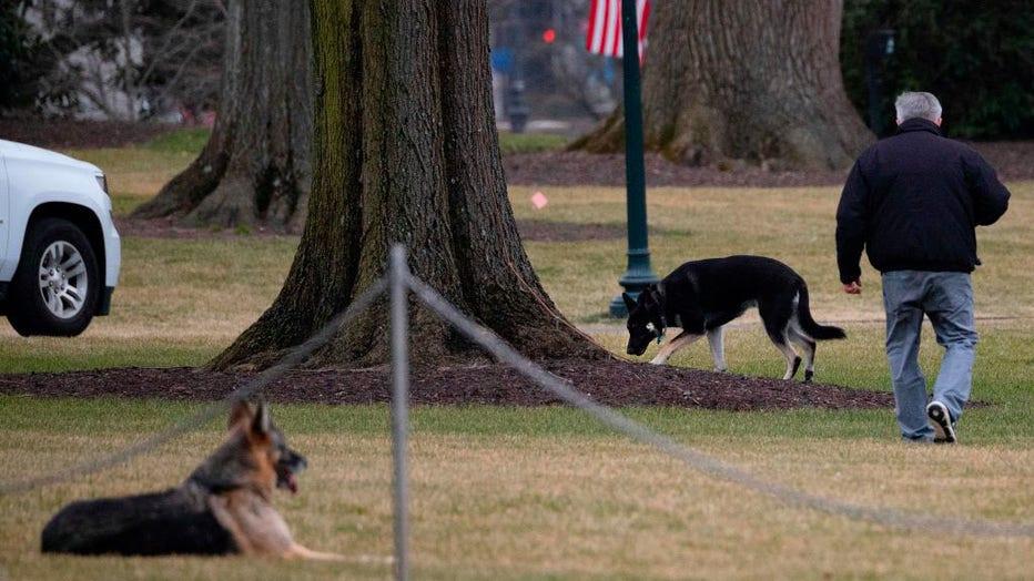 481b3ede-US-POLITICS-BIDEN-DOGS