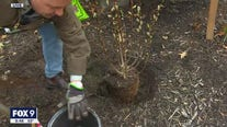 How to properly plant trees & shrubs with Dale K