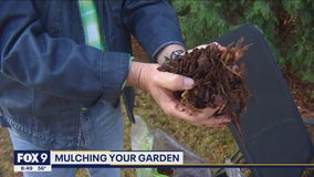 The best way to mulch your garden with Garden Guy Dale K